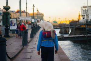 На Васильевском острове часто видят мужчину с котом на плечах. Мы попытались выяснить, кто это: для начала — питомца зовут Пончик Анатольевич…😸