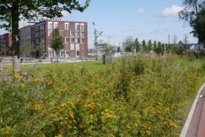 Петербуржцы создали аудиогид с рассказами о «так называемых сорняках» — растениях, которые вы наверняка видели в городе 🌱